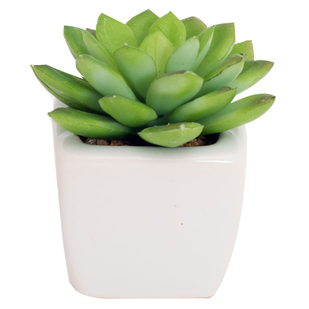 Planta-decorativa-10-cm-Homeclub