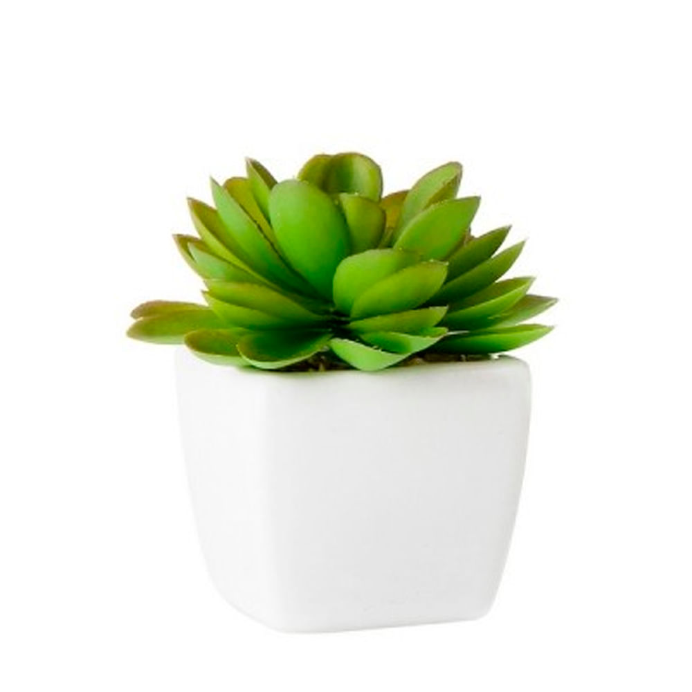 Planta-decorativa-5-cm-Homeclub